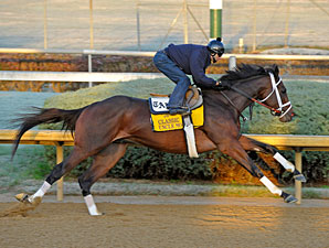 Uncle Mo working at Churchill Downs for the 2011 Breeders' Cup Classic.