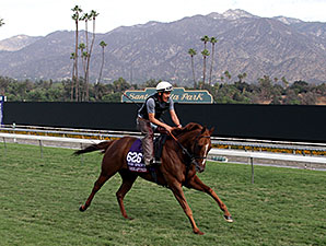 Undrafted - Breeders' Cup, October 30, 2014