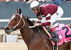 Untapable Preparing for Ogden Phipps Start
