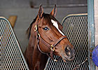 Untapable Out of BC Distaff