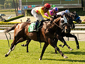 Unusual Heatwave wins the Crystal Water Stakes.
