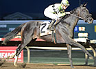 Grade III Winner Uptown Bertie Dies