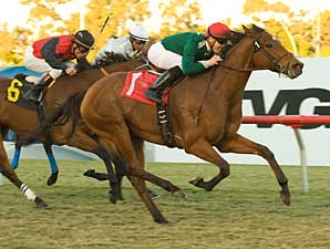Vacare Goes Out a Winner in Dahlia 'Cap