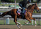 Vagabond Shoes Set to Travel Long in BC Turf