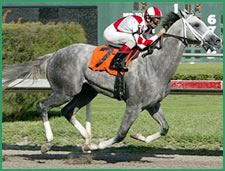 Kentucky Derby Trail: Amazing Grays, How Sweet the Sound