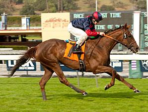 Vamo a Galupiar wins the 2012 Megahertz.