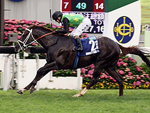 Variety Club Dominant Champions Mile Winner