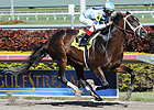 Verrazano Rolls by Daylight at Gulfstream