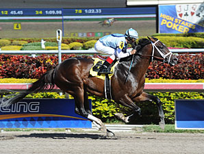 Verrazano Makes Tampa Bay Derby Stakes Debut
