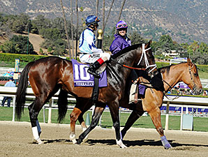 Toronado, Verrazano Meet in Queen Anne