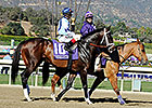 Verrazano to Race in Europe in 2014