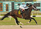 Unbeaten Verrazano Favored in Final KDFW Pool