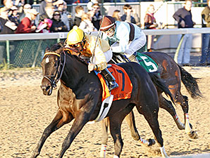 Vexed wins the 2013 Golden Rod Stakes.