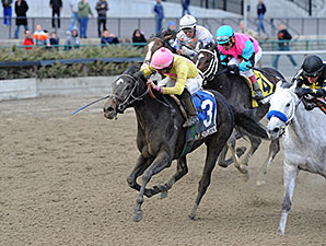 Vicki's Dancer wins the 2013 New York Stallion Series.