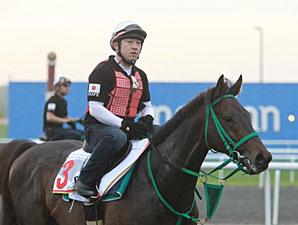 Victoire Pisa Dubai 2011