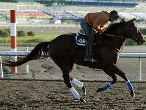 Victor's Cry at Woodbine on September 15, 2010.