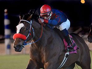 Vilao wins the 2013 San Jacinto Stakes.
