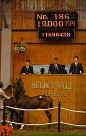 Japanese Foal Sale Hits Record Gross of $71 Million