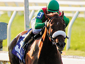 Visionaire Headed for Gotham Stakes