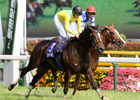 Japanese Mare on All-Time Earnings Quest