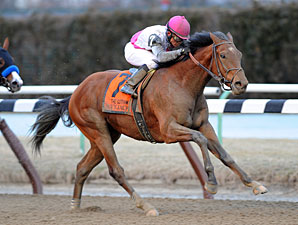 Gotham Winner Vyjack Headed to Wood Memorial