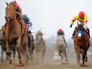 Equine Fatal Injury Rate is Steady in 2012