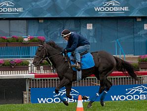 War Dancer - Woodbine, October 18, 2014.