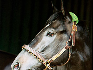 First Stakes Winner for War Emblem