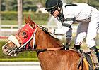 Featured Horse Profile: Warren's Veneda