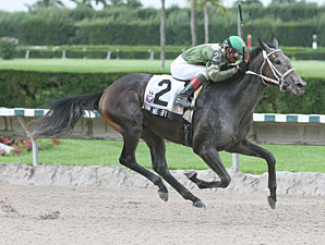 Wave Me By wins the 2009 Seacliff.