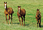 2012 Foal Crop: Slight Dip from &#39;11