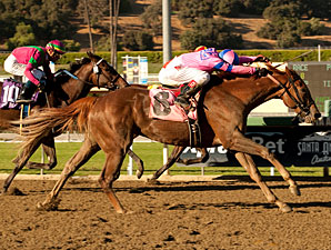 Oak Leaf Tally Lands Weemissfrankie in Cup