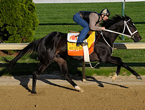 West Side Bernie works at Churchill Downs, April 25, 2009.