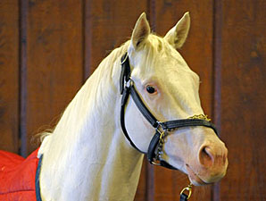 All-White Thoroughbred is Hollywood-Bound