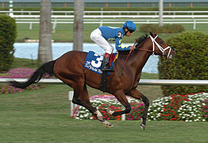 'Other' Pletcher Colt Wins at Gulf
