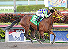 Wildcat Red Pointing for Haskell Invitational