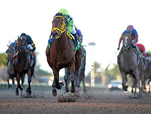 Wildcat Red wins the 2014 Hutcheson Stakes.