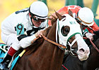 Lukas Weighs Options for Weekend Stakes Stars