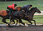 Dullahan, Others Work for Breeders&#39; Cup