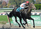 Willet Tests Stakes Streak in Go for Wand