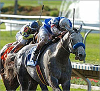 Baffert Duo, Halfbridled Work at Santa Anita