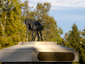 WinStar Offering Breeders' Cup Contest
