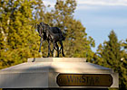 WinStar Expands &#39;Breed to Win&#39; Program 