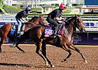 Filly Wind Fire Takes On Top Male Sprinters