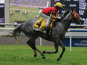 Windward Islands Tries for Nijinsky Repeat