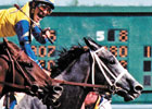 Winning Colors Euthanized