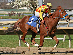 Winning Image wins the 2012 Langhorne Stakes.