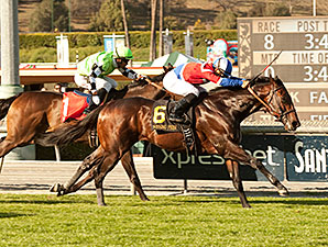 Winning Prize Streaks Home in Kilroe Mile