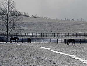 Arctic Blast Leads Tracks to Cancel Racing