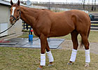 Charles Lopresti Talks About Wise Dan